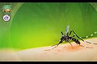 http://healinggaling.ph/ph/wp-content/uploads/sites/5/2016/09/dengue.png